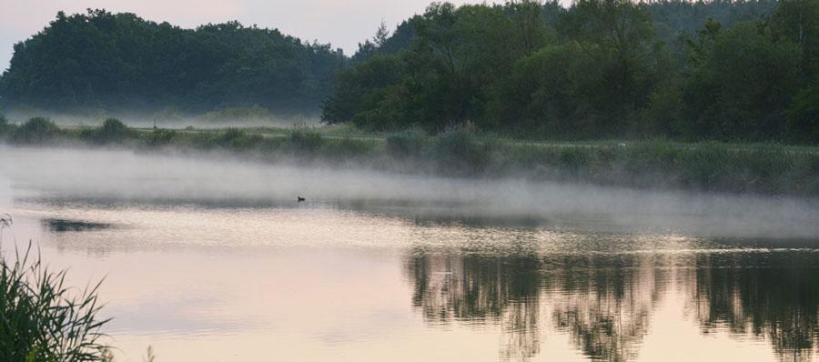 Fluss Wasservogel Nebel